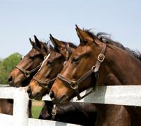 horse-countery